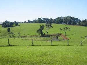 Maleny Dairy Farm